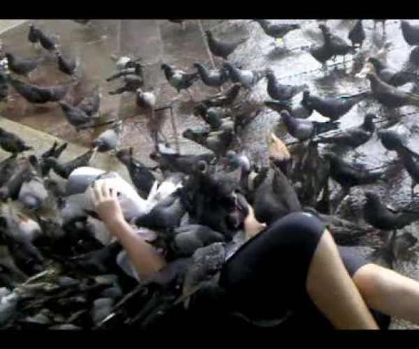A series of unforeseen events – Attacked by pigeons